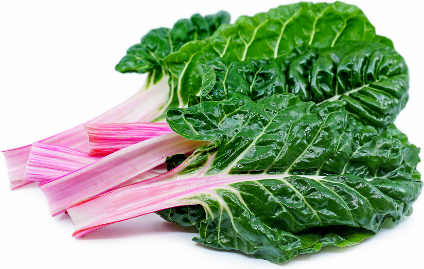 Peppermint Swiss Chard picture