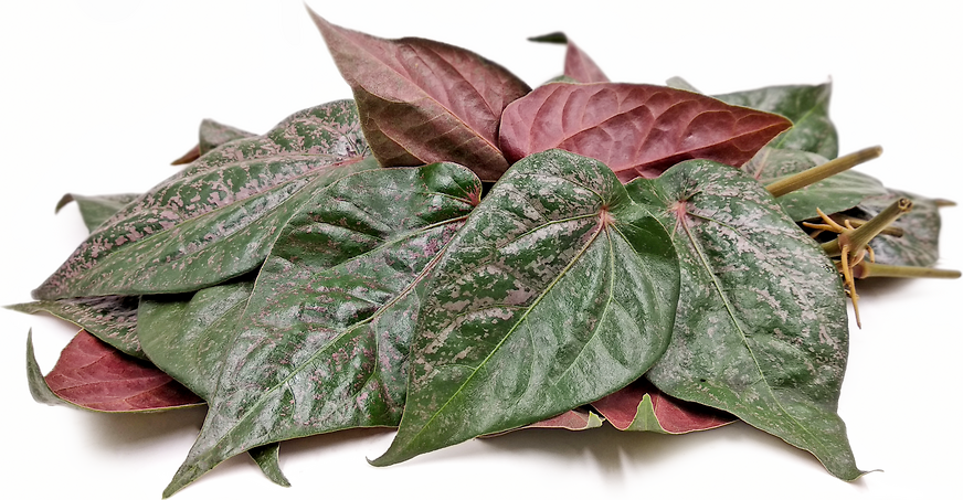 Red Betel Leaves picture