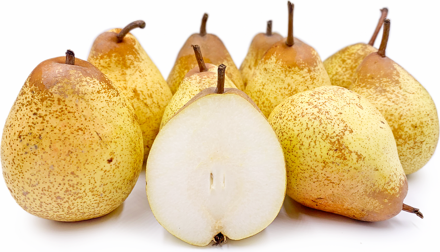 Rocha Pears picture