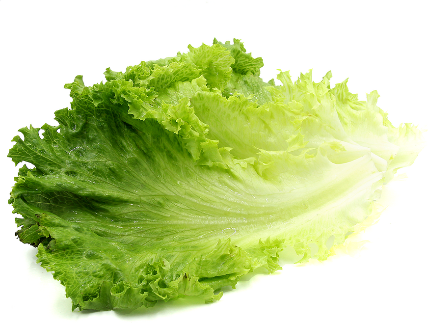 Green Leaf Lettuce Filets Information And Facts