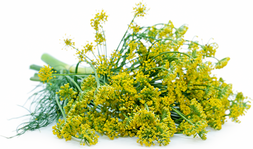 Dill Blossoms picture