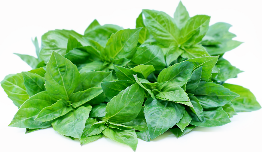 Genovese Basil picture