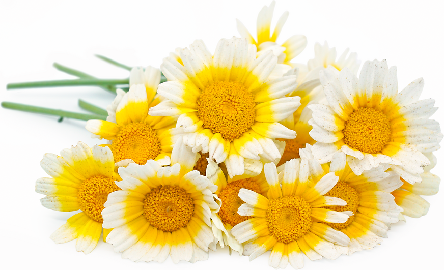Sunny Side Up Flowers picture
