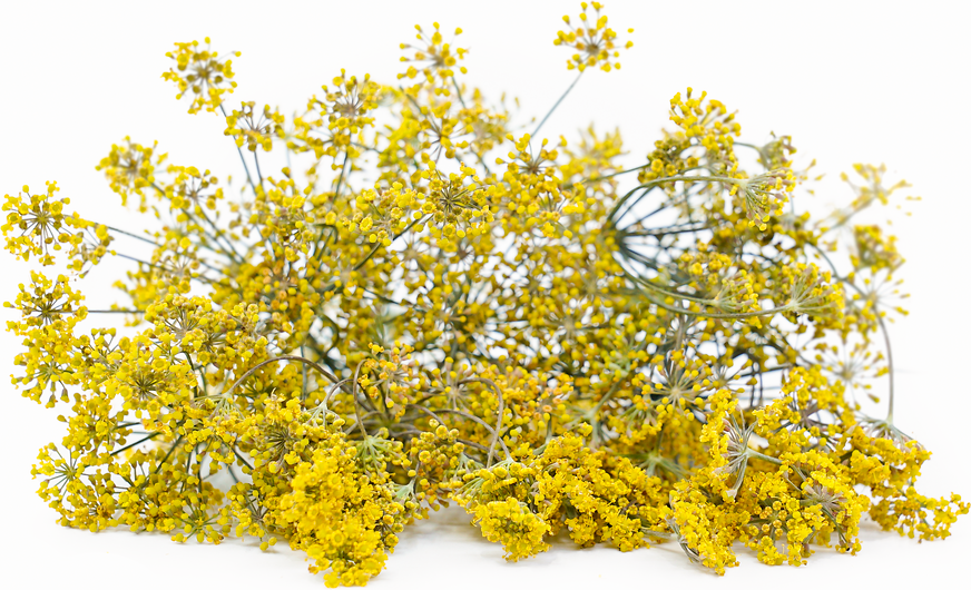 Bronze Fennel Flowers picture
