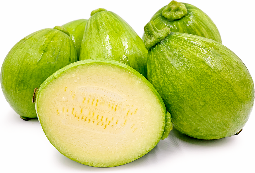 Mexican Squash picture