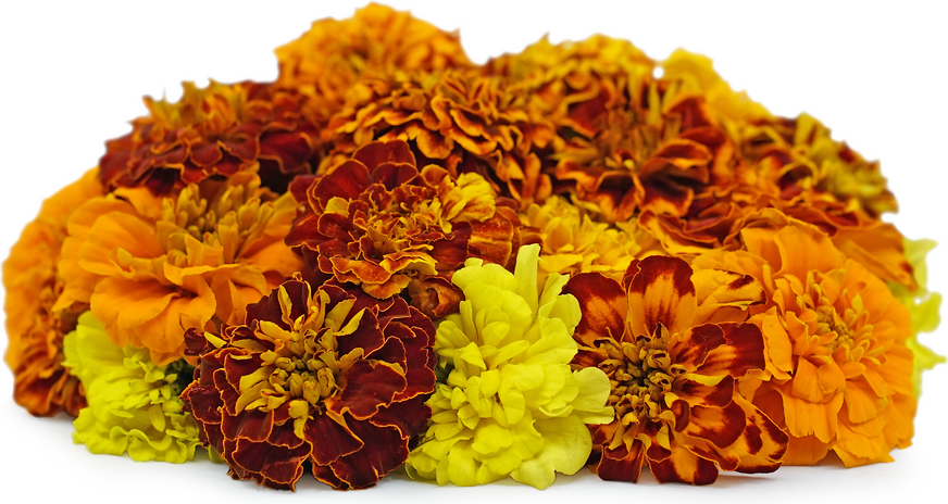 Marigold Flowers picture