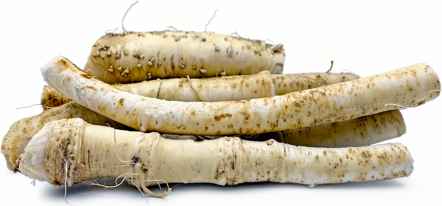 Young Horseradish Root picture