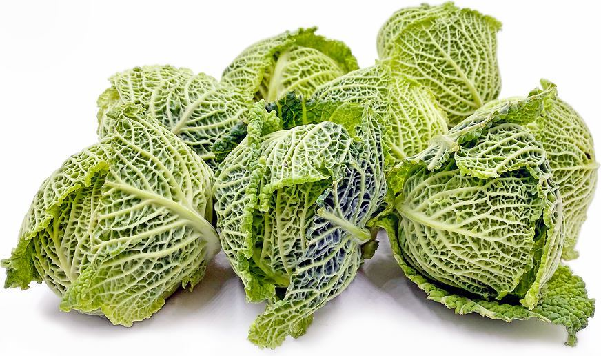 Baby Savoy Cabbage Information And Facts