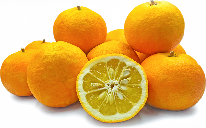 Italian Sour Oranges picture