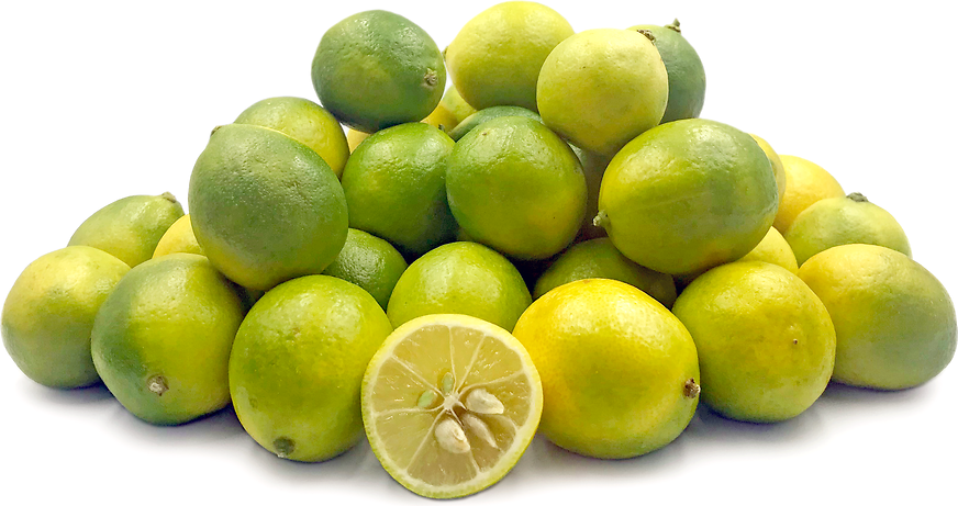 Spanish Limequats picture