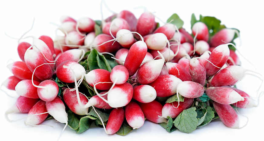 French Breakfast Radish picture