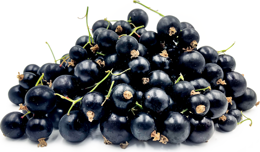 Black Currant Berries picture