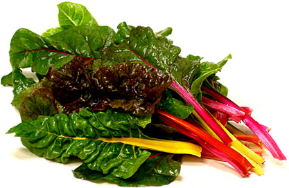 Swiss Baby Rainbow Chard Information And Facts