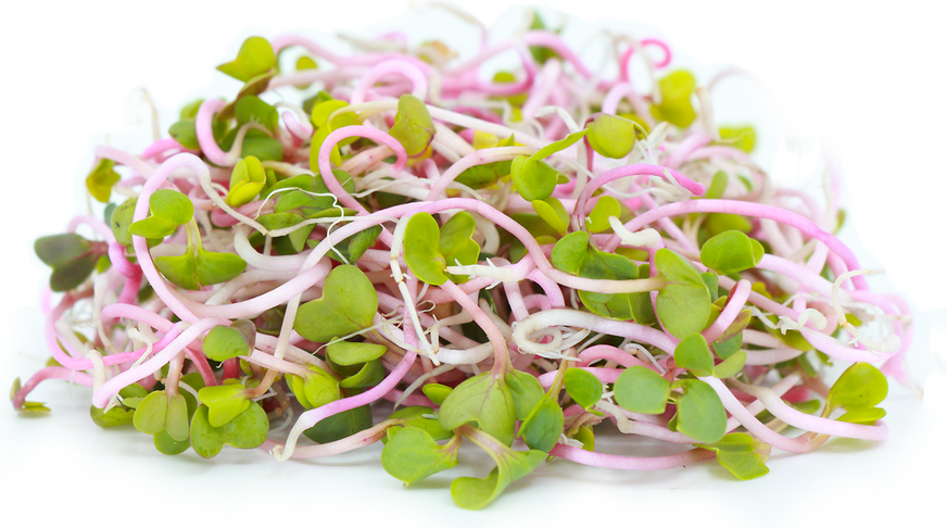 China Rose Sprouts picture