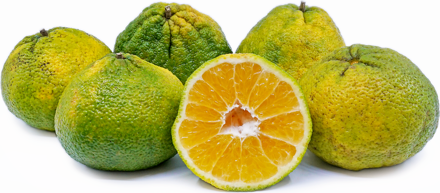 Ugli™ Fruit picture