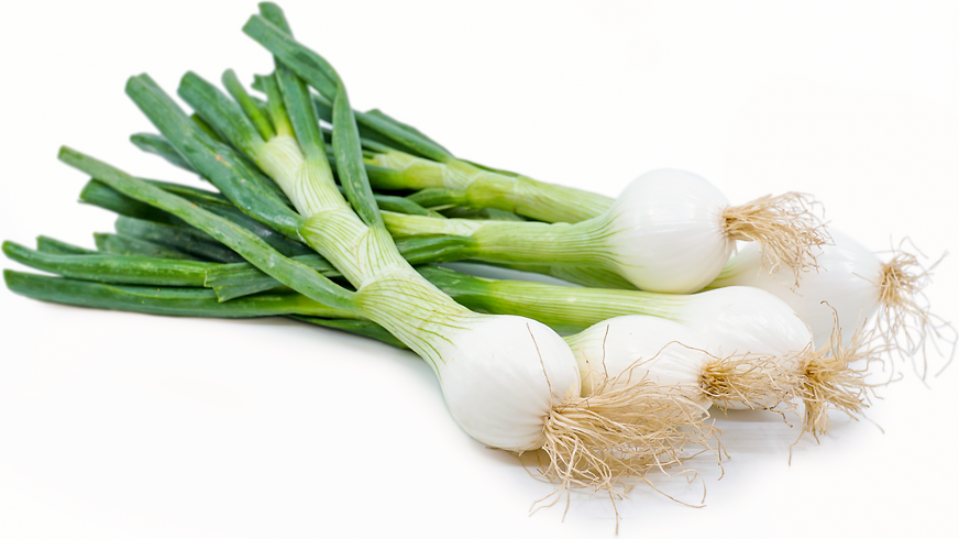 Spring Onions picture