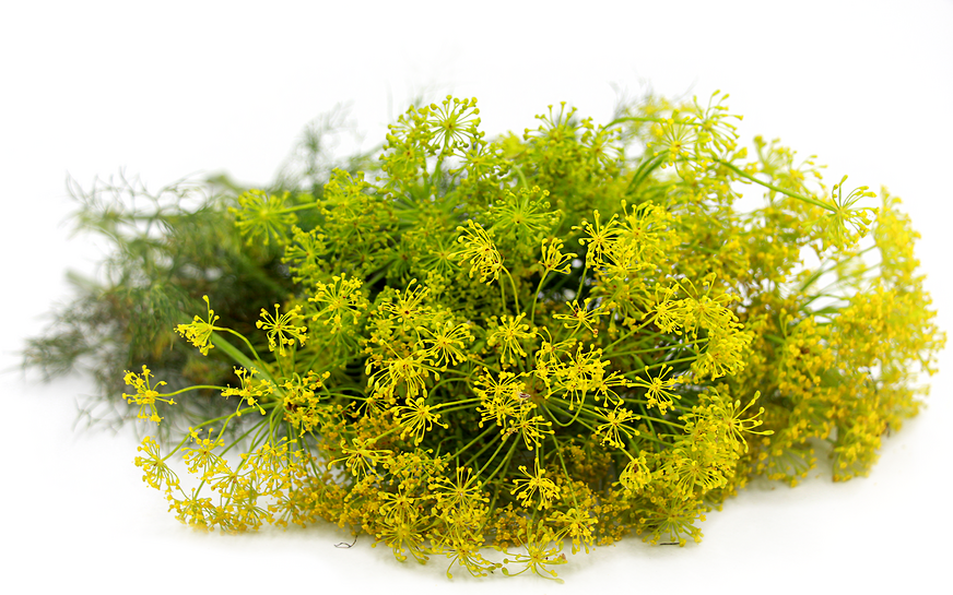 Dill Weed Information, Recipes and Facts