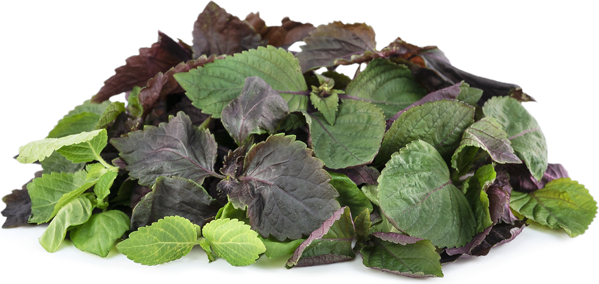 Petite Shiso Mix Information and Facts