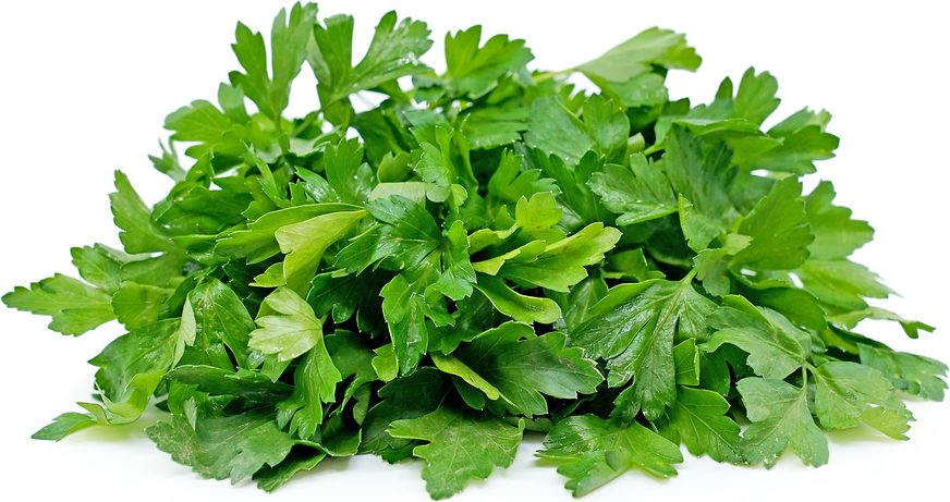 Italian Parsley picture