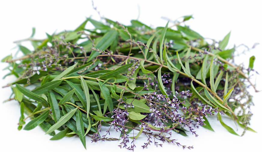 Lemon Verbena Information And Facts