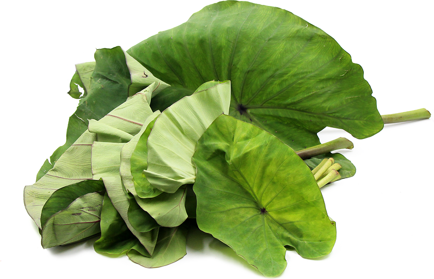 Taro Leaves Information and Facts