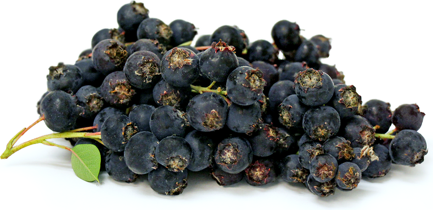 Wild Blueberries picture