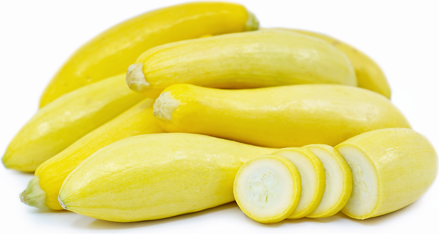 Baby Yellow Crookneck Squash picture