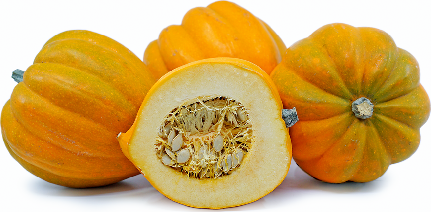Acorn Squash Information And Facts