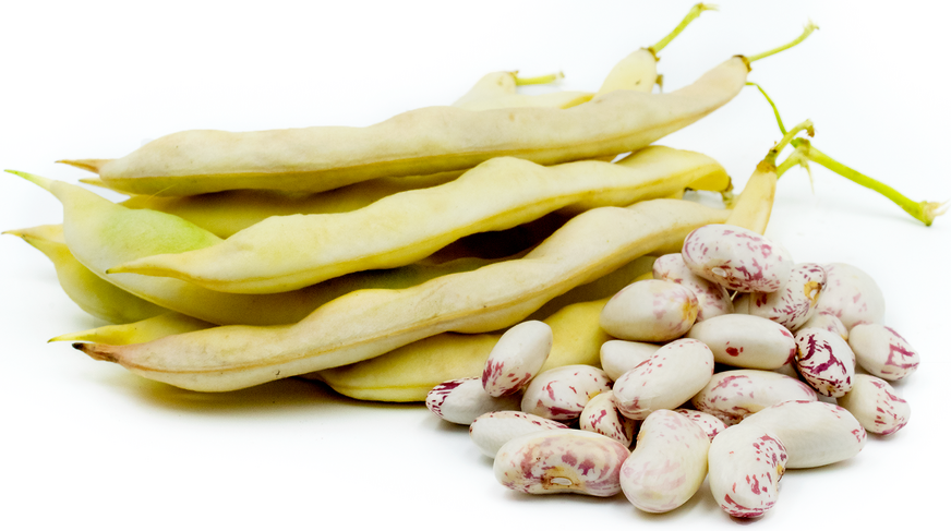 White Cap Shelling Beans picture