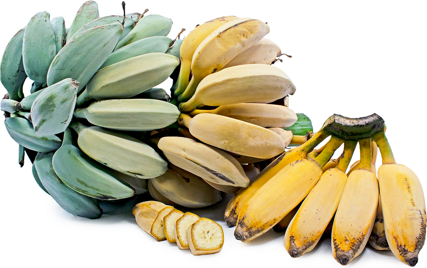Ice Cream Bananas Information and Facts872 x 548 png 616kB