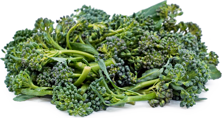 Italian Di Ciccio Broccoli picture