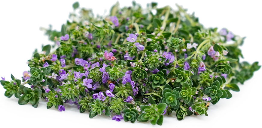 Flowering Thyme Information And Facts
