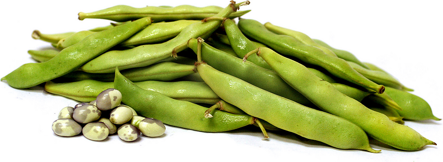 Calypso Shelling Beans picture