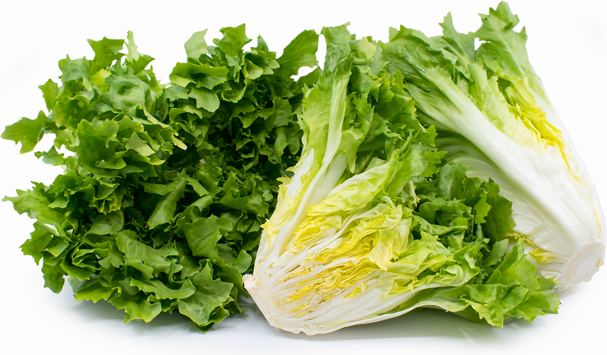 Escarole picture