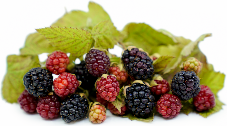 Loganberries picture