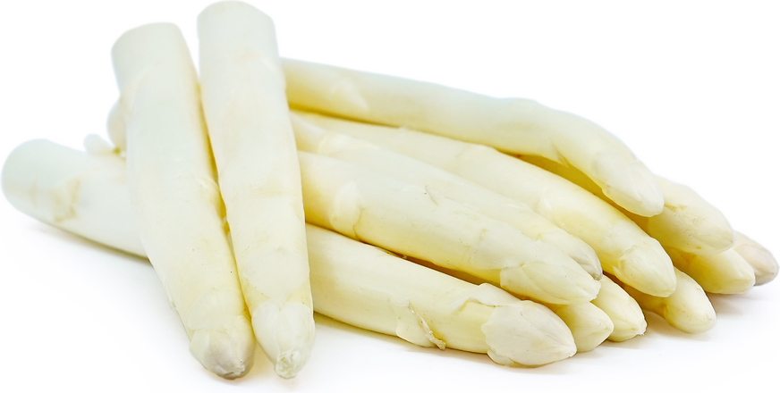 White Asparagus Information And Facts
