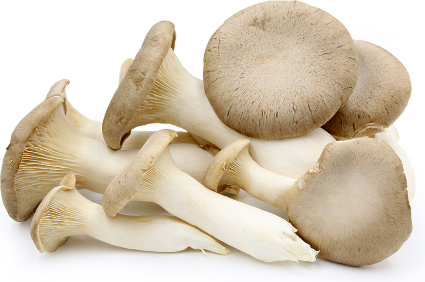 King Trumpet Oyster Mushrooms picture
