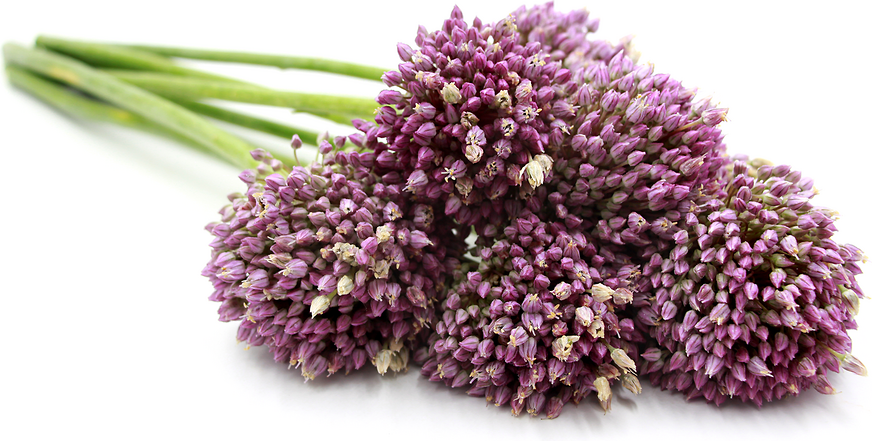 Garlic Flowers Information And Facts