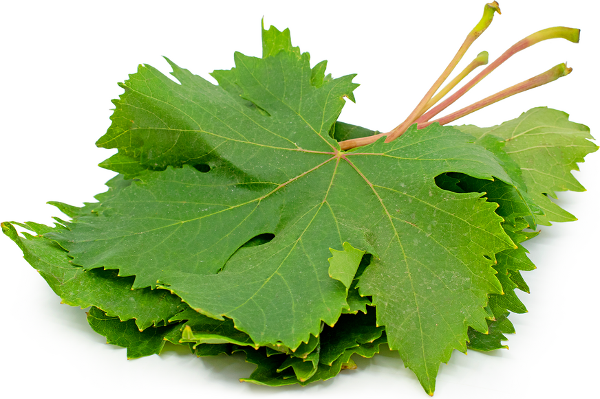 Grape Leaves Information And Facts