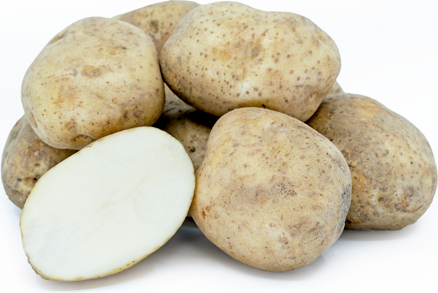 Kennebec Potatoes picture