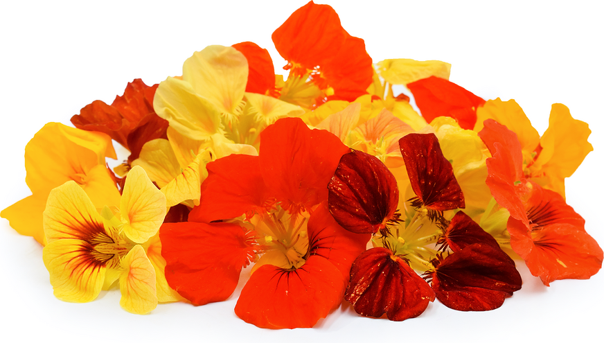 Nasturtiums Flowers picture