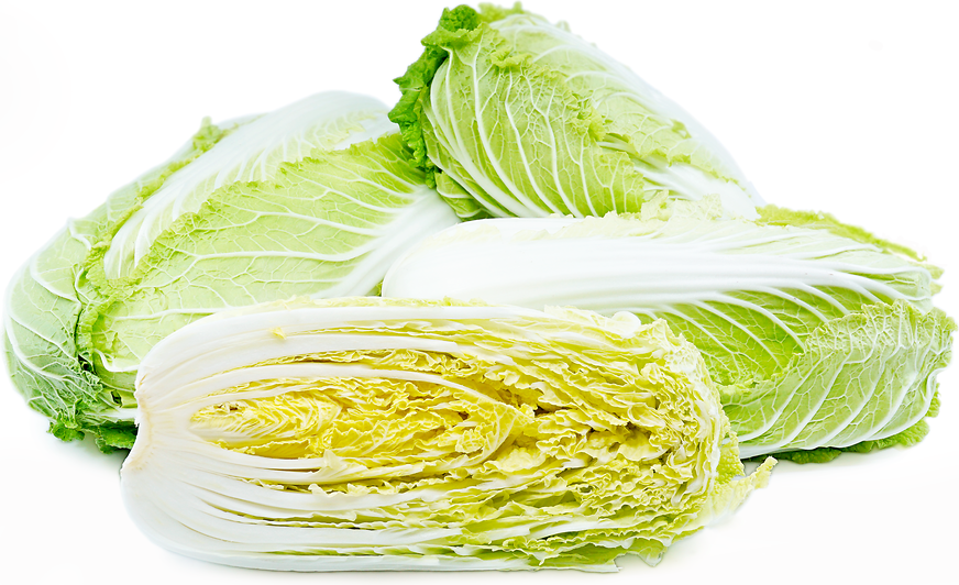 Napa Cabbage Information Recipes And Facts