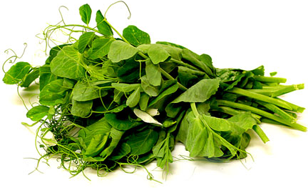 Pea Tendrils Information And Facts