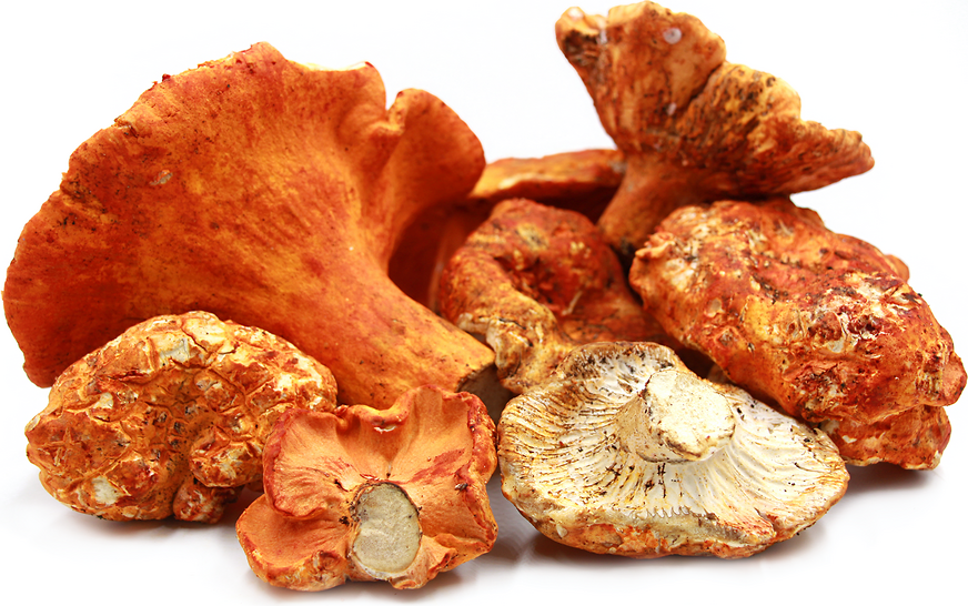 Lobster Mushrooms Information, Recipes and Facts