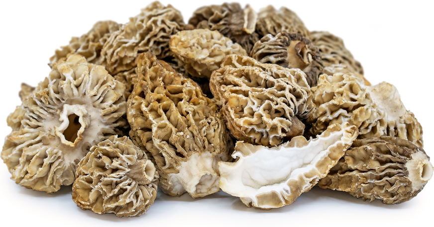Morel Mushrooms picture