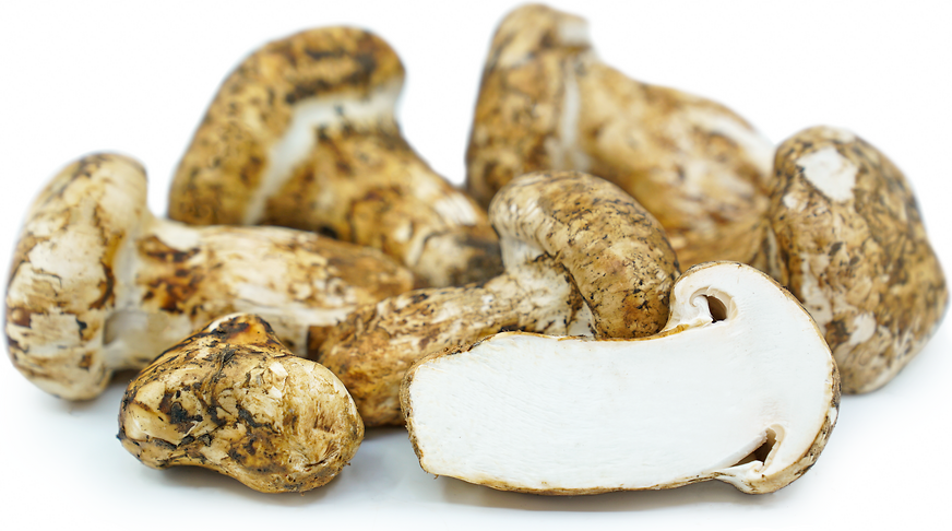 Matsutake Mushrooms picture
