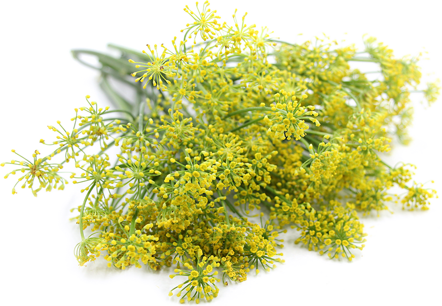 Fennel Blossom picture