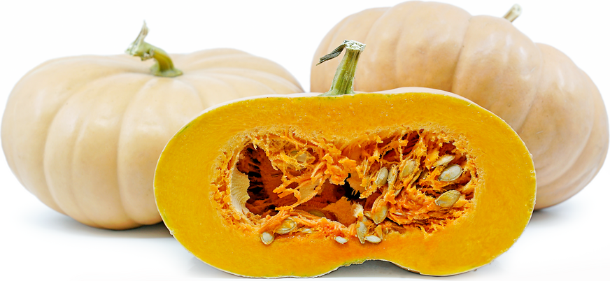 Long Island Cheese Squash picture