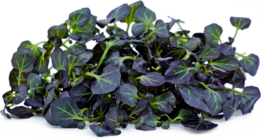 Petite®  Watercress Red picture