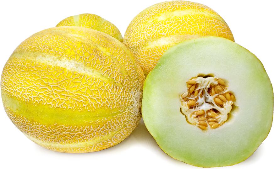 Italian GIANT Honeydew  Melon White Flesh 10 seeds Organic Sweet Delicious